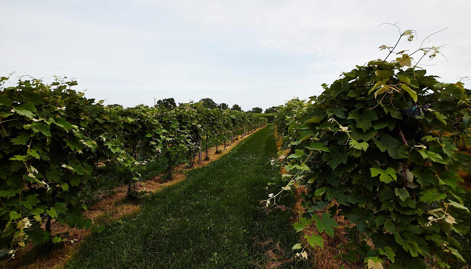 central-il-wineries